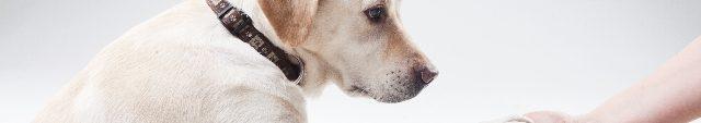 犬の習性としつけ