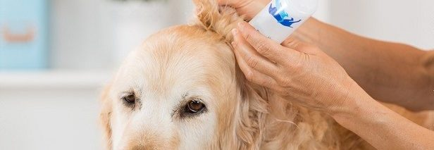 耳が臭いときは要注意!犬の耳掃除のやり方や頻度