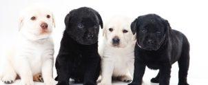 犬のフケ原因と予防対策