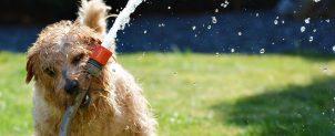 犬の噛み癖の直し方