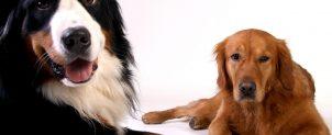 犬がツメを噛む理由と対処