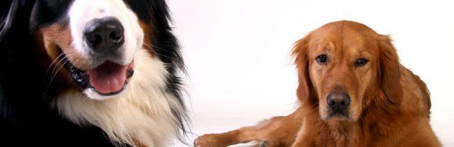 犬が爪を噛む理由