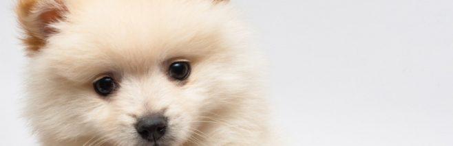犬の目やにの原因と取り方。多い・臭いは要注意