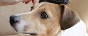 犬がブラッシングを嫌がる?正しいやり方と頻度