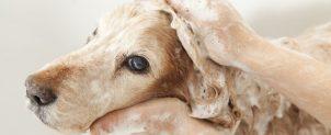 犬のシャンプーのやり方や頻度