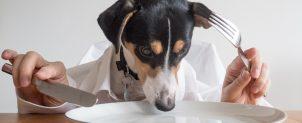 犬がドッグフードを食べない理由と対処方法